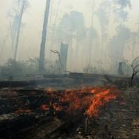 Sự bùng phát của côn trùng giúp chống lại thảm họa tự nhiên
