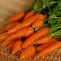 Cách trồng cà rốt mini ngon bổ rẻ ngay tại nhà