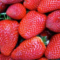 Công nghệ bọc lụa an toàn giúp trái cây tươi lâu hơn