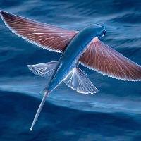 11 loài cá lập kỷ lục bơi nhanh nhất thế giới