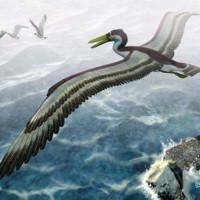 Loài chim khổng lồ từng thống trị bầu trời Nam Cực 50 triệu năm trước