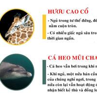 Thói quen ngủ lạ thường của các loài động vật