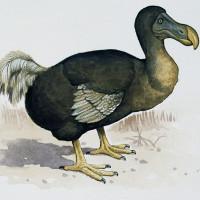 Giải oan cho loài chim bị con người tuyệt diệt