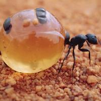 17 kỷ lục gia trong thế giới côn trùng
