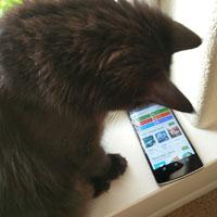 Chùm ảnh hài hước: Công nghệ đã thay đổi cuộc sống của mèo như thế nào?