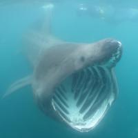 Video: Cá mập phơi dài 7m bơi sát du khách chèo xuồng