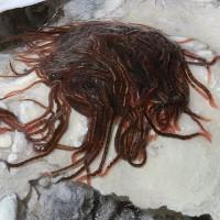 Trong hang động kinh dị này tồn tại một sinh vật làm sửng sốt các nhà khoa học