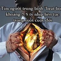 Những sự thật thú vị về trái tim của bạn