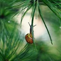 Khám phá thế giới đầy thơ mộng như cổ tích của loài ốc sên