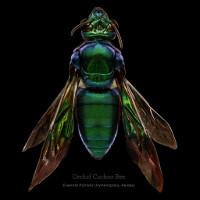 Đây là cách nhiếp ảnh gia tạo nên một tác phẩm macro về côn trùng