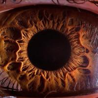 Chùm ảnh lạ lẫm về những vật bình thường được nhìn qua kính hiển vi