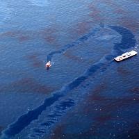 Dùng vi khuẩn khắc phục sự cố dầu tràn