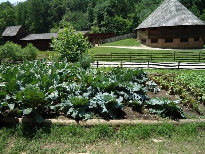Tổng thống Washington giám sát, quản lý các hoạt động của trang trại ở Mount Vernon như trồng, phát triển các loại rau củ, cây ăn quả.