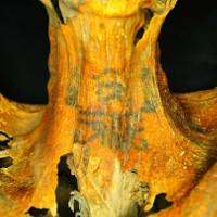 Những hình xăm lạ trên xác ướp phụ nữ Ai Cập 3.000 năm tuổi