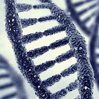 Nên kiểm tra gene để đoán bệnh Alzheimer từ lúc còn trẻ