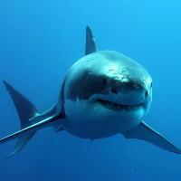 So sánh kích thước các loài cá mập trên thế giới