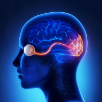 Các nhà khoa học bước đầu hồi phục được thị lực cho chuột bị mù mắt