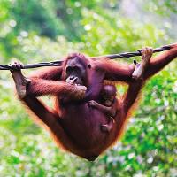 Loạt ảnh tuyệt đẹp của động vật hoang dã trong tự nhiên