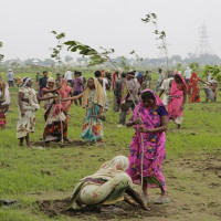 Ấn Độ trồng 50 triệu cây chỉ trong một ngày