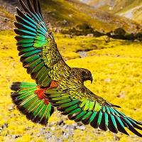 Các loài động vật quý hiếm ở New Zealand