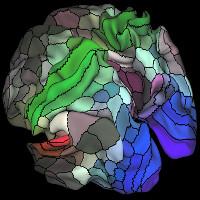 Bản đồ não mới tiết lộ 97 vùng chưa được biết đến
