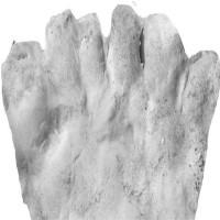 """Chân tay 6 ngón là """"mốt"""" thời cổ đại ở Mỹ"""