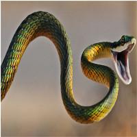 Vì sao con rắn có một thân hình dài ngoằng?