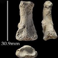 """Tìm thấy xương """"ngón tay thối"""" 9 vạn tuổi ở Ả Rập Saudi"""