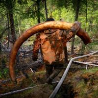 Xác voi ma mút nghìn đô vùi trong lớp băng cổ đại