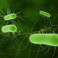 Vi khuẩn kháng được tới hai loại kháng sinh dự phòng đã được tìm thấy tại Mỹ