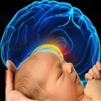 Não người phát triển nhanh nhất sau khi sinh