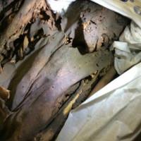 Xác ướp người Ai Cập 4.200 năm tuổi có thể chết do ung thư