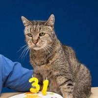 Cụ mèo già nhất thế giới tương đương với người 141 tuổi