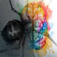 MIT tìm ra mạch thần kinh kiềm chế các hội chứng ám ảnh sợ hãi