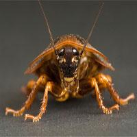 Các loài động vật nhỏ có khả năng chống lại phóng xạ