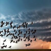 Cách đương đầu khôn ngoan với siêu bão của loài chim