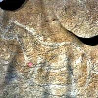 Tây Ban Nha phát hiện hàng chục bức vẽ trên đá niên đại 14.000 năm