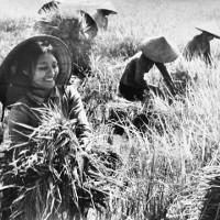 Vẻ đẹp của người phụ nữ Việt Nam xưa và nay