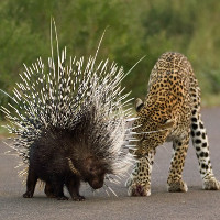 """Điểm mặt những loài vật biết """"đánh cắp"""" chất độc của loài khác"""