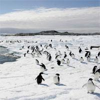 Sẽ có khu bảo tồn biển lớn nhất thế giới ở Nam Cực