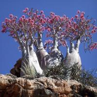 Những loài cây kỳ quái chẳng sợ sa mạc