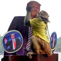 """Chú khỉ """"tiên tri"""" dự đoán Donald Trump đắc cử Tổng thống Mỹ"""