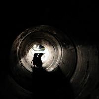New Zealand xây đường hầm cho chim cánh cụt
