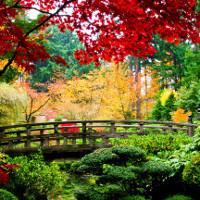 """Bộ ảnh mùa thu """"trải thảm vàng"""" trên khắp thế giới"""