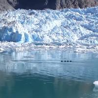 Video: Phát hiện quái vật rồng khổng lồ trên sông băng?
