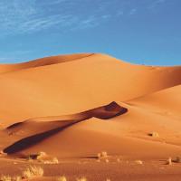 Thủ phạm biến thảo nguyên Sahara thành sa mạc khô cằn