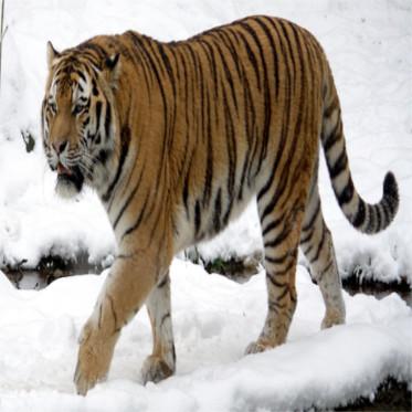 Những loài động vật gặp nguy hiểm nhất hành tinh