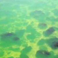 Biển Đen đổi màu xanh bất thường khiến người dân hoang mang