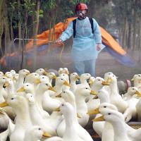 Triệu chứng và cách phòng chống bệnh cúm A/H7N9