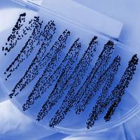 Bất ngờ tìm ra một loại kháng sinh mới khi nghiên cứu kiến ở Châu Phi